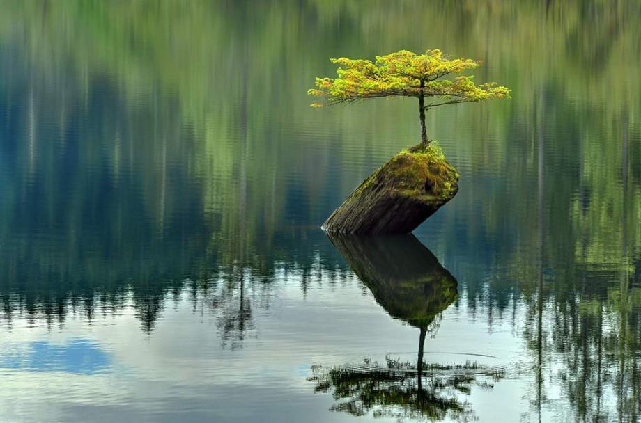 mindfulness-bonsai-sur-rocher-dans-leau