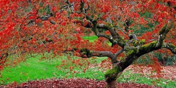hojas-rojas-en-otoño